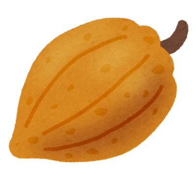 Fruit cacao kakao